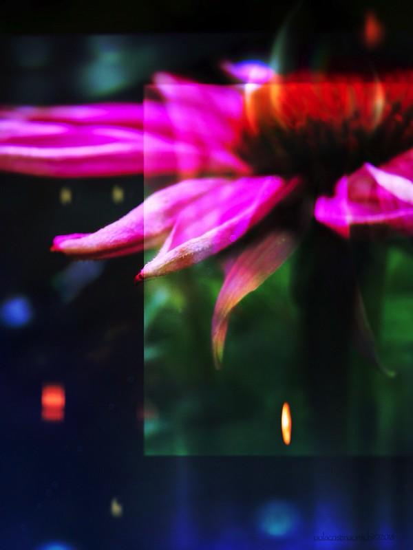 """scenes from another garden ~ 5"""