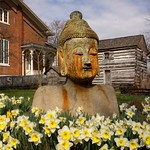 Fri, 03/16/2012 - 11:15am - Buddha with Bright Yellow Daffodils Bloom in Foreground, Bare Trees Blue Sky in Background