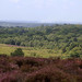 New Forest near Picket Post
