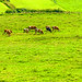 The pasture by rotraud_71