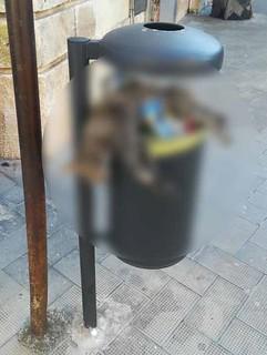 Gatto nei rifiuti a Casamassima