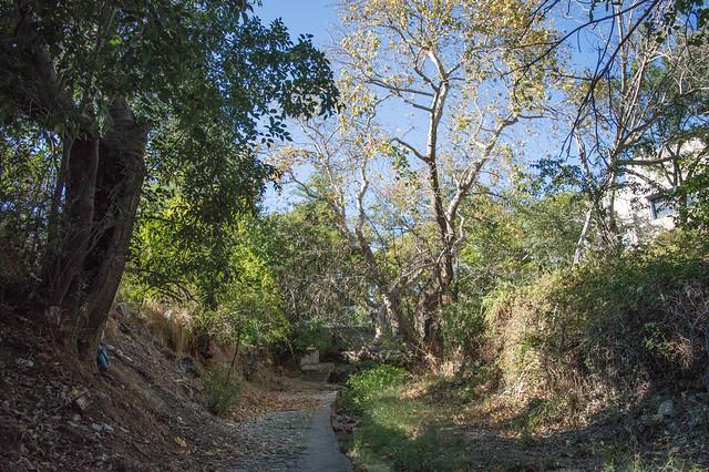 Η ζέστη και η έλλειψη τρεχούμενου νερού ταλαιπωρούν τα αιωνόβια δέντρα στην κοιλάδα της Ψίνθου