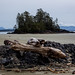 Hornby Island-13.jpg