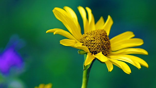 Flowers, Forest Hill Pond, Sony ILCA-77M2, Sony 70-300mm F4.5-5.6 G SSM (SAL70300G)