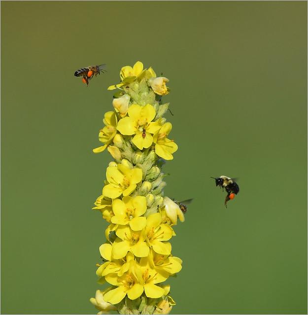 Pollen Paradise, Nikon D500, AF-S VR Nikkor 300mm f/2.8G IF-ED