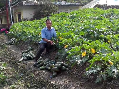 अपने खेत में सब्जियाँ तोड़ते दलवीर