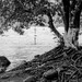 Río de triste raíz por Marcos Núñez Núñez