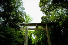 Meiji Jingu Torii