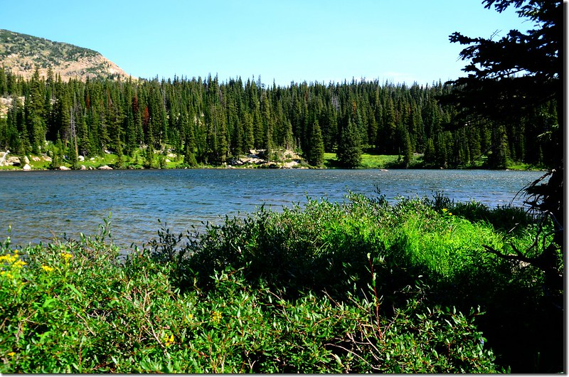 Lower Forest Lake  (3)