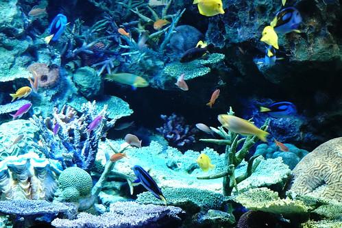 【サンシャイン水族館】α6500+SEL18135の練習も兼ねて水族館を堪能してきた