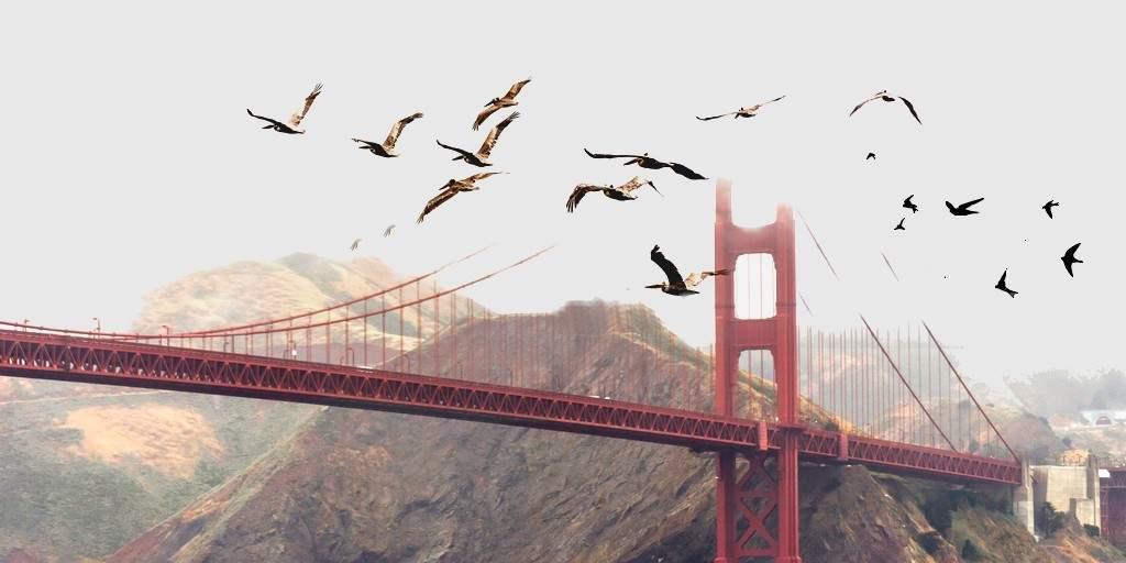 Des drones pour protéger les avions des oiseaux