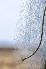 2194: Fishing Net