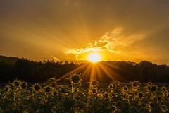 Sunrise &Sunset