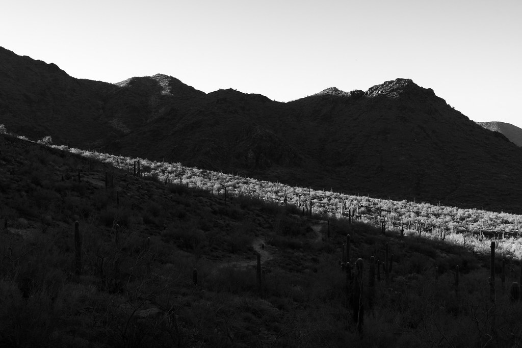 A black-and-white picture of a strip of sun illuminating the desert between the mountains on the Gateway Loop trail at McDowell Sonoran Preserve in Scottsdale, Arizona