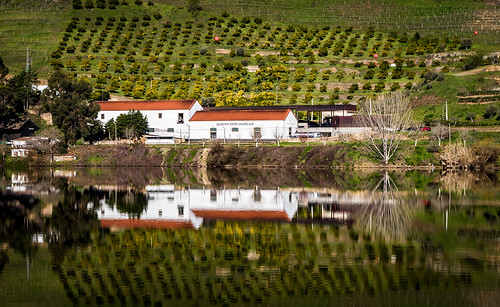Reflections on the Douro