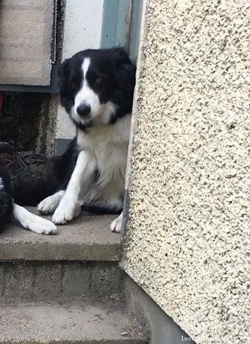 [Reunited] Sat, Aug 4th, 2018 Lost Female Dog - Main Street, Baltinglass, Wicklow