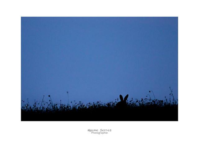 Rabbit of Caerbannog, Canon EOS 7D MARK II, Canon EF 300mm f/4L IS