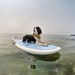 Deckerdog Testing Kahuna Paddle Boards