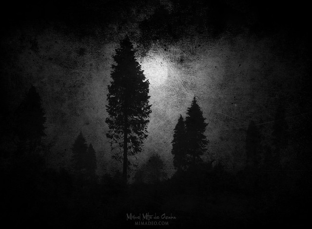 The night of werewolf