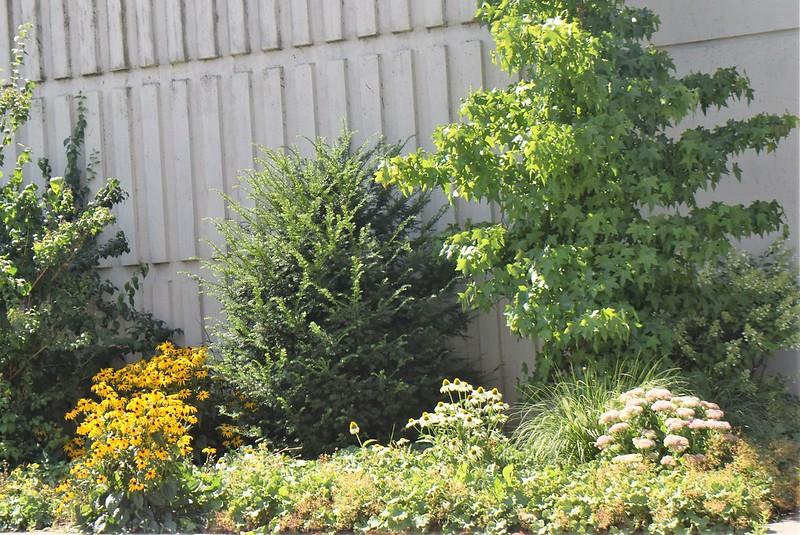 Flowerbeds 27.07 (1)