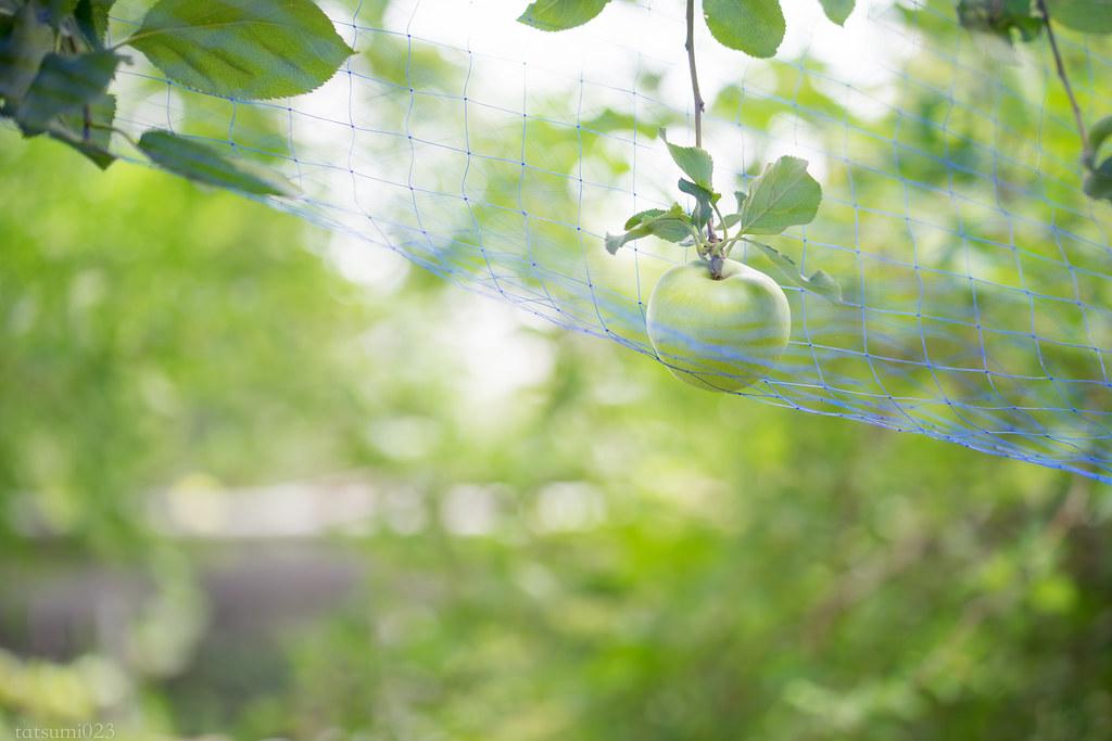 2017-07-25 小石川植物園 002