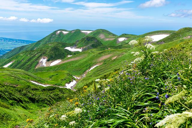 お花いっぱいの登山道@御田ヶ原分岐へ