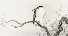 Quack on erratic branch (1900 - 1910) by Ohara Koson (1877-1945). Original from the Rijks Museum. Digitally enhanced by rawpixel.