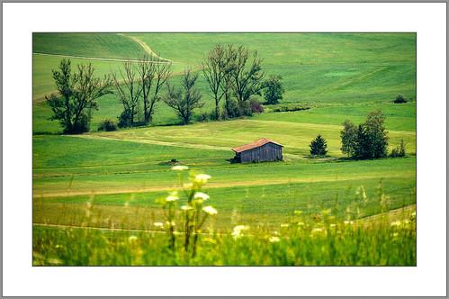 Im schönsten Wiesengrunde (beautiful meadow ground)