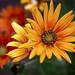 Flowers .. by Julie Greg