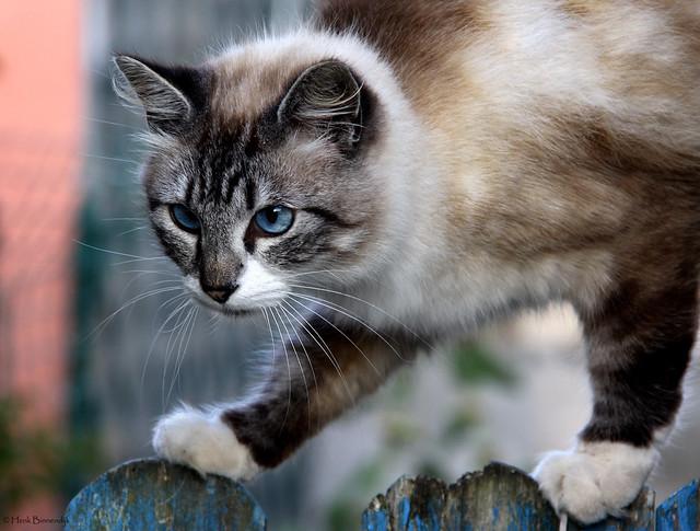 Île de Groix: Le Méné cat