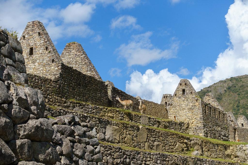Machu Picchu-05542