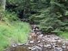 Grimpette en forêt de Murat