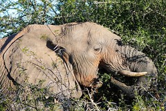 South Africa - Addo Elephant Park