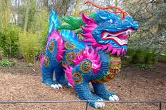 Zoo Dragon