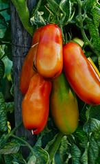 Früchte + Gemüse