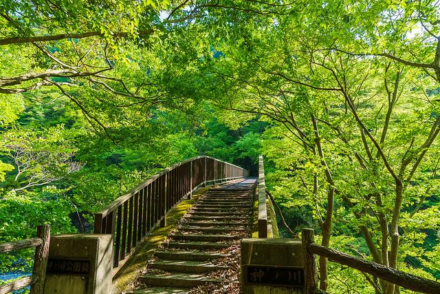 新緑眩しい神ノ川公園橋