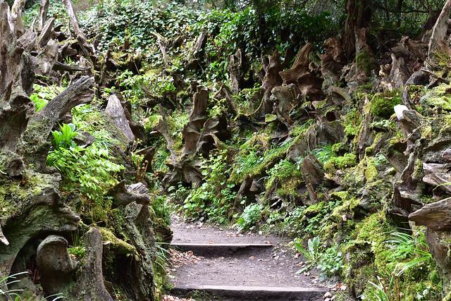 Stumpery Path