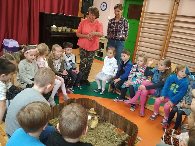 """Kurczaczki i kaczuszki z wizytą w klasach """"0"""" A i """"0"""" B"""