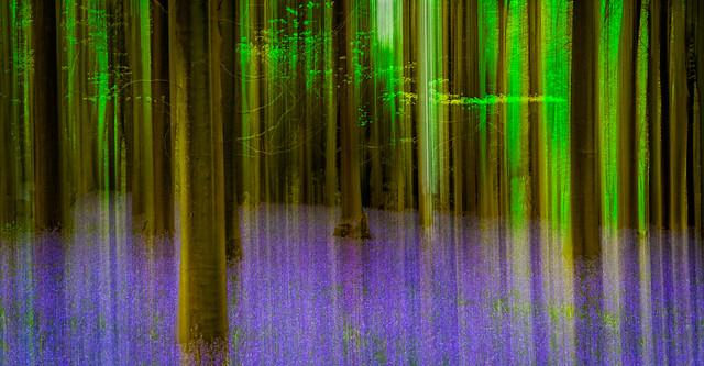 Kings wood blur