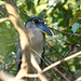 A87A3345 Boat billed heron by steve.ray50