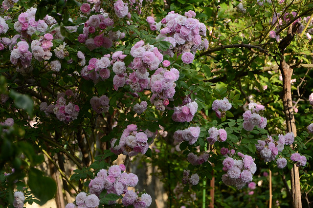 les jardins sont beaux en mai ! - Page 6 40469066850_6273d97262_z