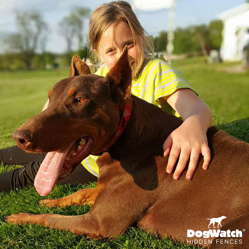 Doberman Pinscher, DogWatch of Southeast Ohio