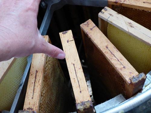 Kikeriki #16 abeilles