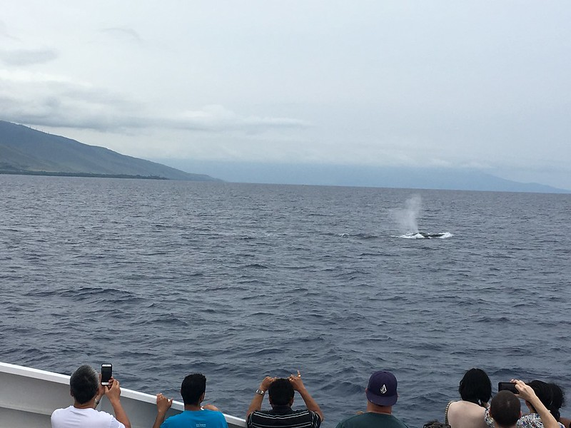 whale blowholes