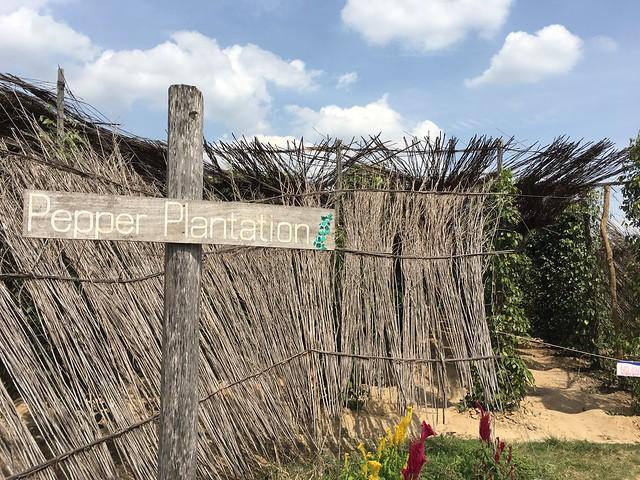 Sothy's Pepper Farmのコショウ畑