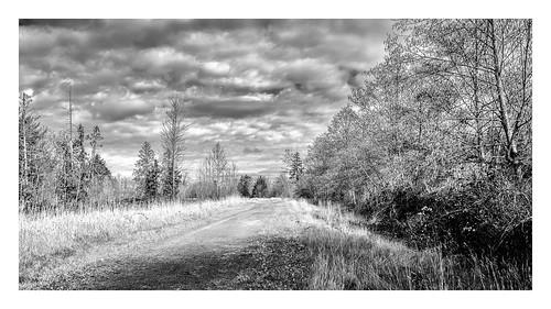 ebeyslough snohomish washington unitedstates us washingtonstate northwest trinterphotos richtrinter landscape blackandwhite clouds