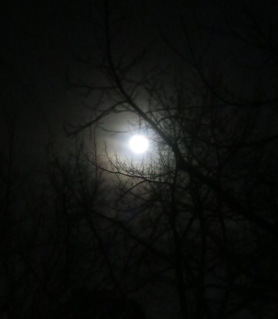 Blue Moon Tree