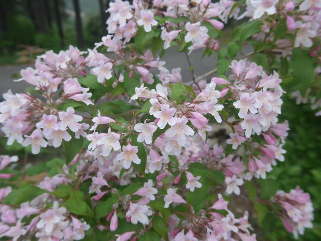 les jardins sont beaux en mai ! - Page 2 42054005522_53db0a835b_z