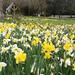The Chalet Open Garden - Surrey