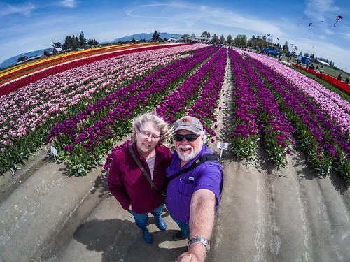 Skagit Valley Tulips-13
